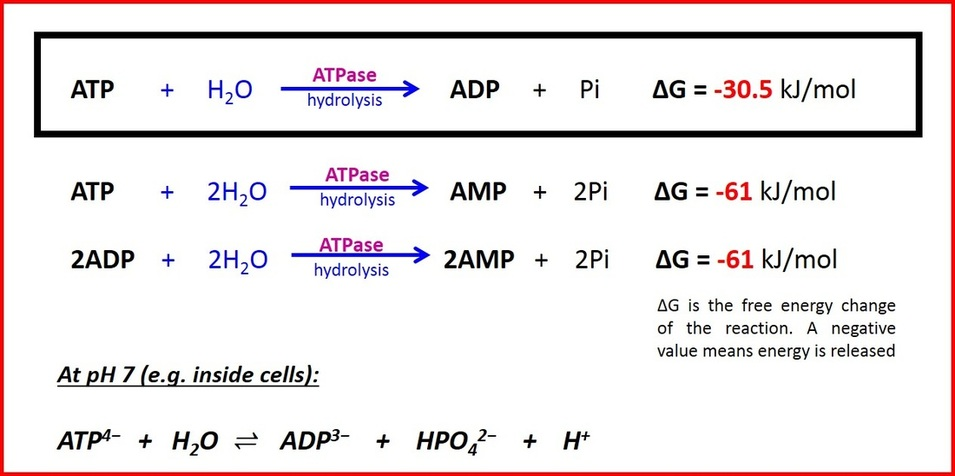 Atp Structure Function